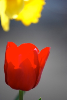 flower4m